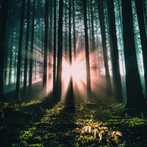 Vom Dunkel ins Licht – Vom Tod zum Leben